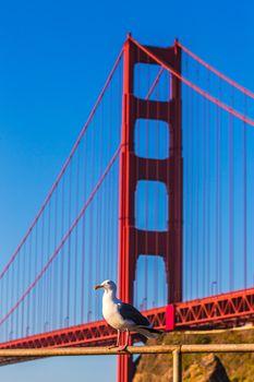 San Francisco Golden Gate Bridge seagull California
