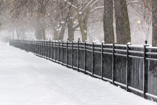 Snow storm in a park in Chicago