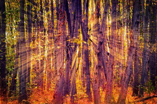 Sun light in wood