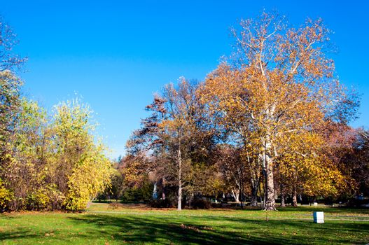 Fall in park