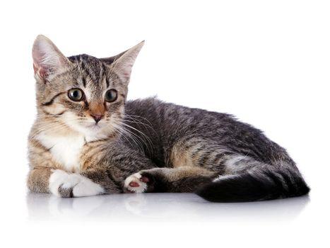Striped kitten.