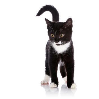 The black and white kitten costs on a white background.