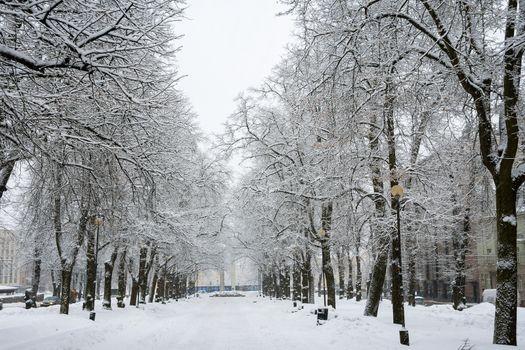 Old trees alley during a snowfall. Kaarli boulevard, Tallinn, Estonia
