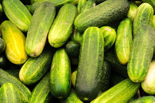Bunch of cucumber