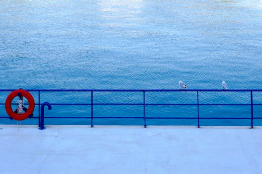 Seagulls couple