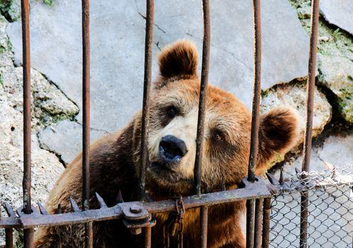 Locked bear