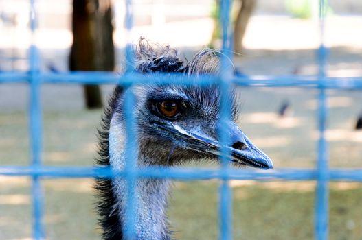 Locked bird