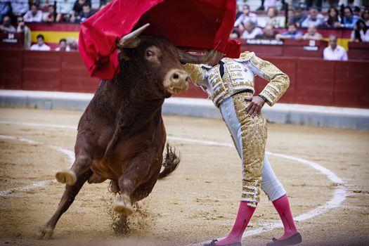 Spanish bullfighter bullfighting giving a spectacular chest pass