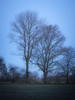 Trees evening mood