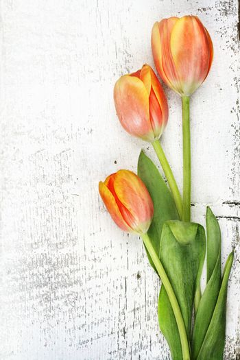 Three beautiful orange tulips over a rustic background with copy space.
