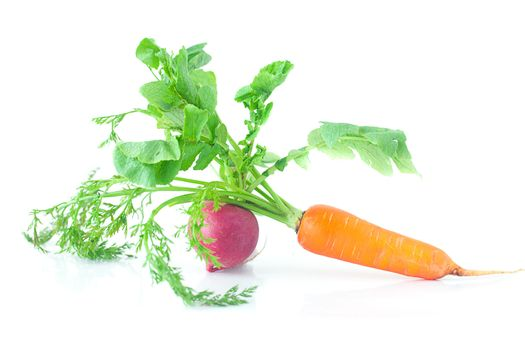 bunch of carrots with green leaves and radish isolated on white