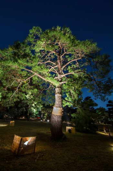 Seasonal illuminations at Rikugien Garden