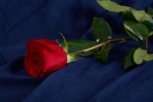 Red rose flower on blue fabric