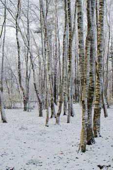 Autumn park after a snow storm