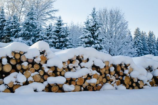 Stack of cut timber logs in a forest