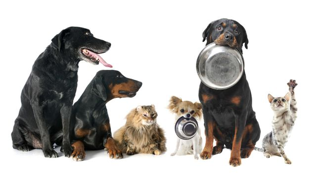 hungry pets in front of a white background