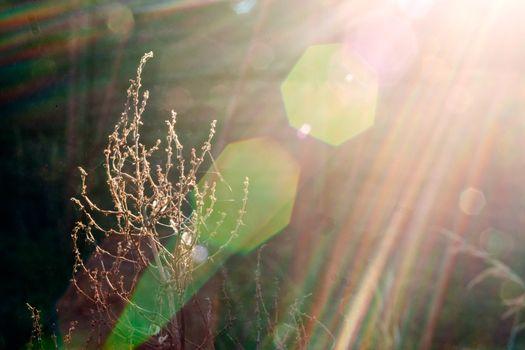 Plant in sunlight beam
