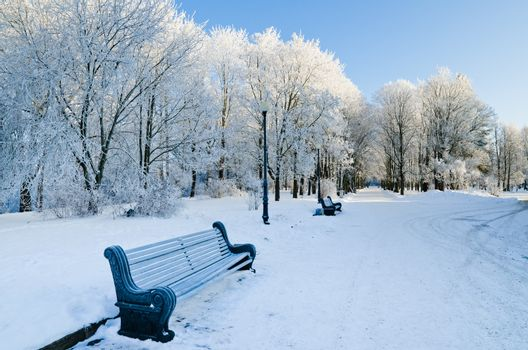 City Park with benches sunny frosty day.
