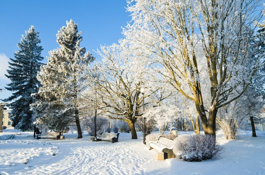 Trees covered with hoarfrost in the city park winter day. Sillamae, Estonia.
