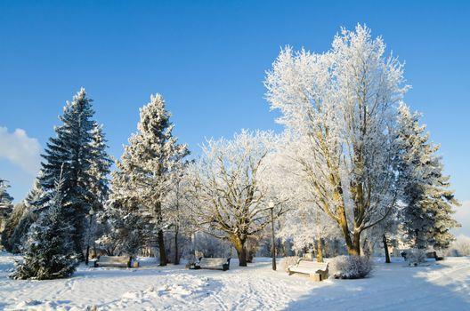 City Park sunny frosty day.
