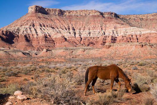 Domestic Animal Livestock Horse Grazes Desert Southwest Canyon