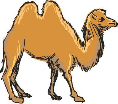 hand drawn, sketch, cartoon illustration of camel