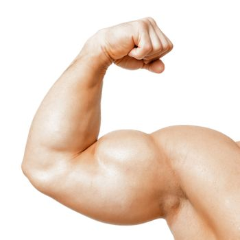 muscle biseps