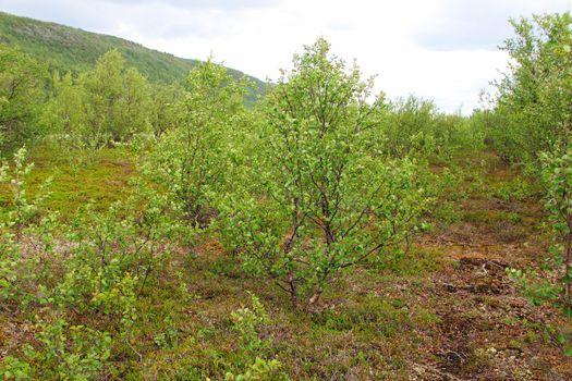 Flora of tundra