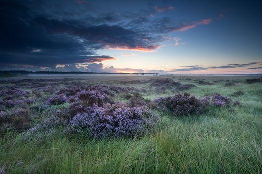 sunrise over marsh with flowering heather