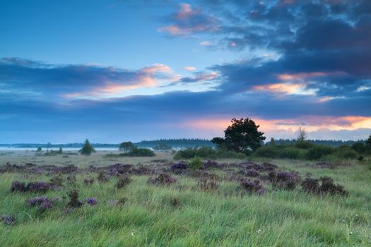 summer sunrise over marshes with heather