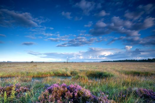 morning sunlight over swamp with heather