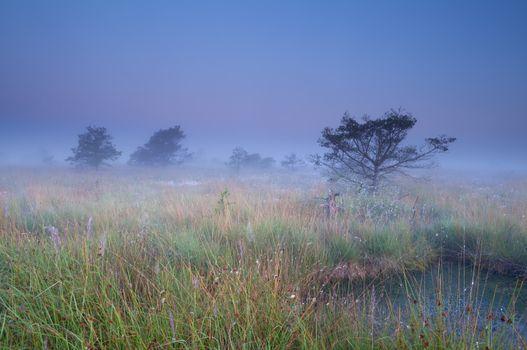 fog over swamp at sunrise