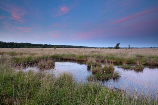swamp in dusk