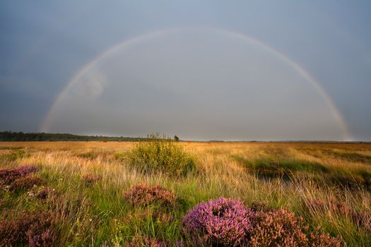 colorful rainbow over swamp with heather