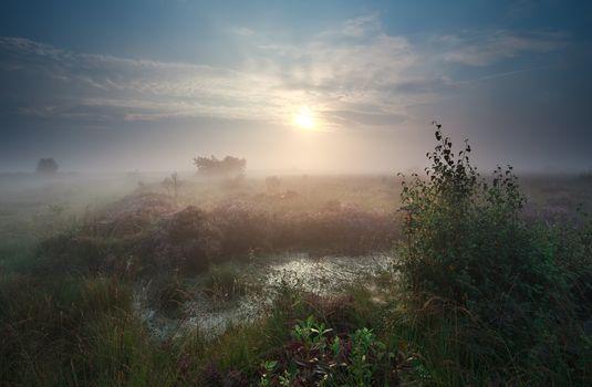 calm misty sunrise over marsh