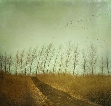 Country path in autumn fields