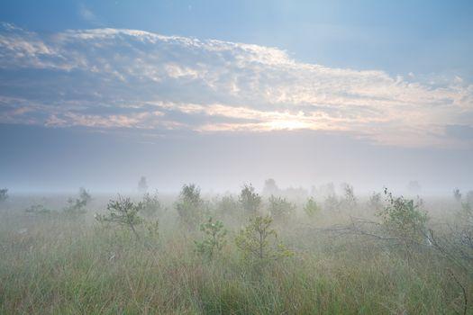 misty sunrise over marsh with many little pine trees