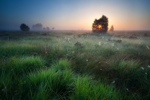 sunrise over marsh with spidernets ans cotton-grass