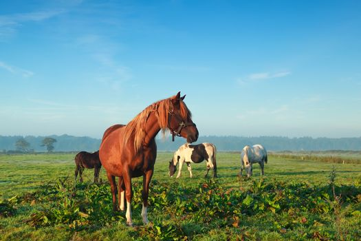 few horses grazing on morning pasture