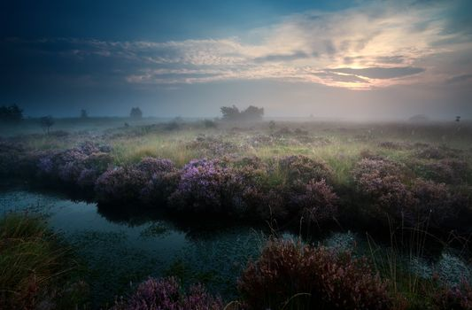 sunrise over swamp with heather