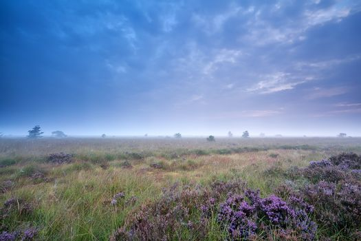 clouded morning over marsh with heather