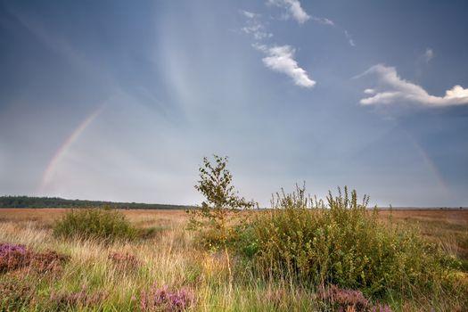 rainbow over marsh with heather