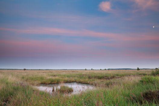 swamp in summer dusk