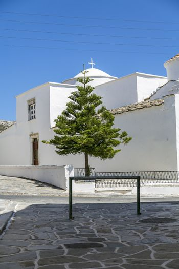 exotic conifer in front of a greek chapel