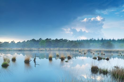 fog over swamp by forest