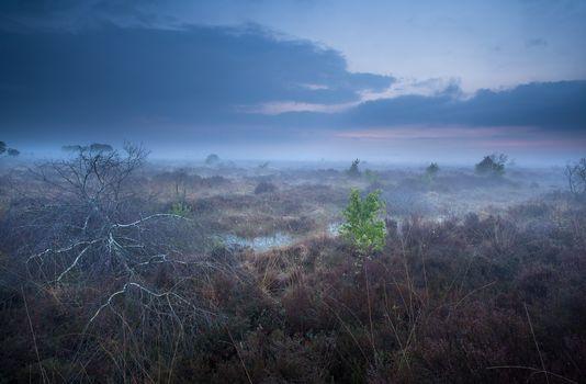 misty dusk on marshes