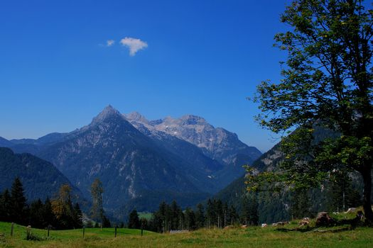 high pointed mountain with green alpine pasture and tree in foreground