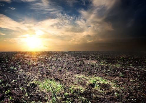 Sunrise over the cultivated field