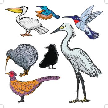 set of sketch illustrations of the birds