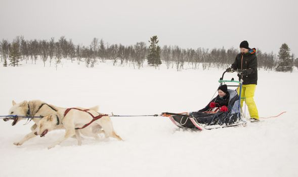 Boys on a sleigh driving a dogsled